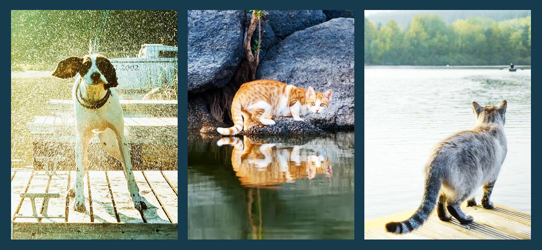 Pet Food Recalls_Three_Pictures